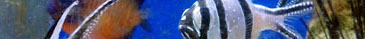 Aquatic Landing Bar 2