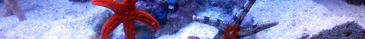 Aquatic Landing Bar 3