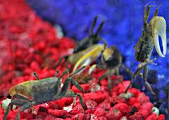 fish aquarium crab