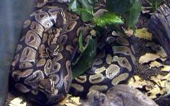 Python Uncle Bills Pet Centers