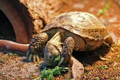 Tortoises Uncle Bills Pet Centers