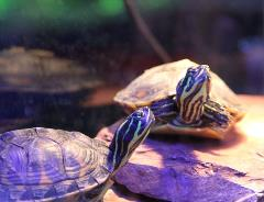Turtles Uncle Bills Pet Centers