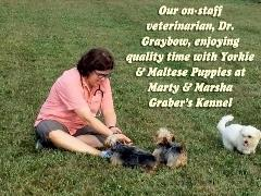 Dr Graybow Plays with Yorkie & Maltese Puppies Outside Yard Kennel