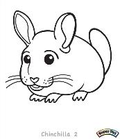 Chinchilla-2
