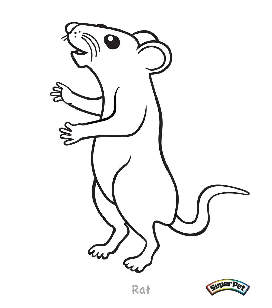 Coloring Book Small Rats Coloring Coloring Pages